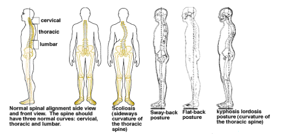 "Maintaining ""GOOD"" Posture Throughout Life!"